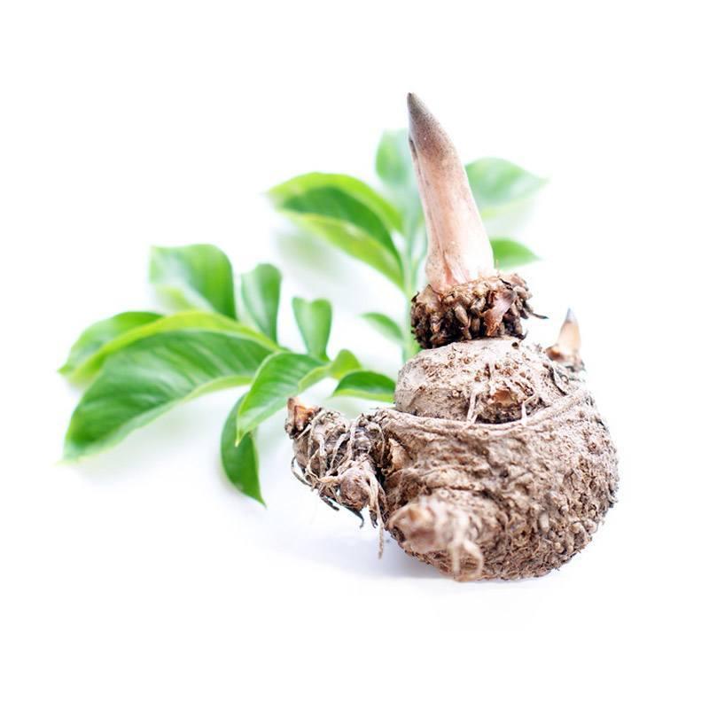 Glucomannan (Konjac Root)