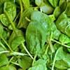mini spinach - Supergreens Complex - 2 Månader Leverans