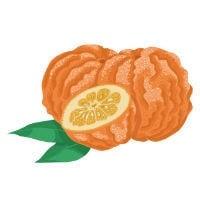 bitter orange 200 1 - Etude : Quels sont les meilleurs brûleurs de graisse thermogéniques naturels ?