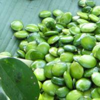 griffonia 200 - Przegląd: Jakie są najlepsze naturalne środki hamujące apetyt?